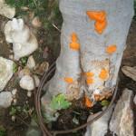 תמונה של סביבת הגזע והשורשים