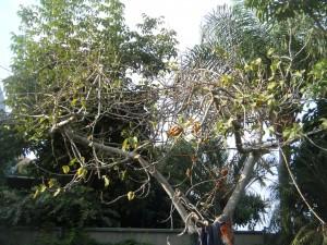 תמונה כללית של העץ